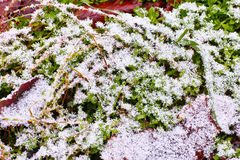 Ice crystals on leaf litter Stock Photography