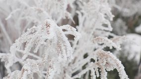 Ice crystals on frozen grass blades stock video