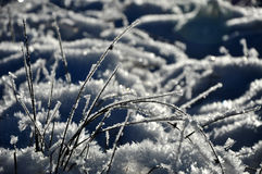 Ice crystals and frozen plants at winter Royalty Free Stock Photo