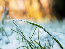 Ice Crystals On Grass. Closeup of ice crystals on grass Royalty Free Stock Photo