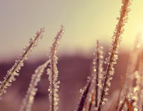 Ice crystals on grass at sunset. Stock Photos