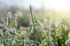 Ice crystals on green grass close up. Royalty Free Stock Photo