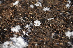 Ice crystals with mud. Fall ice crystals with mud royalty free stock images