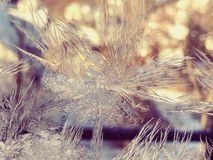 Ice crystals patterns Stock Photos