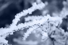 Ice crystals on a tree branch. Fresh snow on tree branches Stock Photos