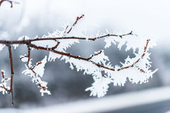 Ice crystals on tree branches. Royalty Free Stock Photography