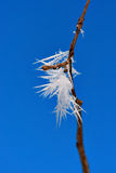 Ice crystals on twig Royalty Free Stock Image