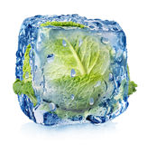 Ice cube with brussel sprouts Stock Photography