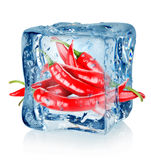 Ice cube and chili peppers. Isolated on a white background stock photography