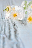 Ice cube with frozen flowers Royalty Free Stock Image