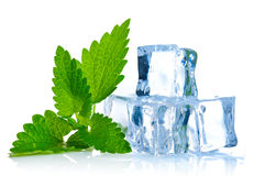 Ice cube with leaf of melissa. On white background Stock Photography