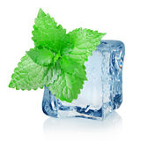 Ice cube and mint Stock Image