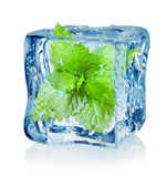 Ice cube and mint. On a white background Royalty Free Stock Photos