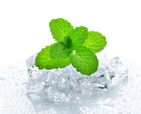 Ice cube and mint. On a white background Royalty Free Stock Photo