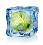Ice cube and savoy cabbage. Isolated on a white background Stock Photography