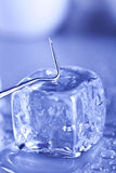 Ice cube and sterile conditions Royalty Free Stock Images