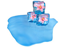 Ice cubes with flowers and air bubbles Stock Photos