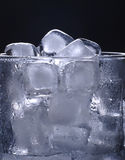 Ice cubes in glass Royalty Free Stock Image