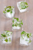 Ice cubes with herbs Royalty Free Stock Photo