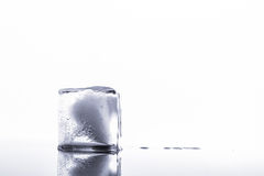 Ice cubes isolated Stock Photography