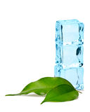Ice cubes and leaves Stock Photo