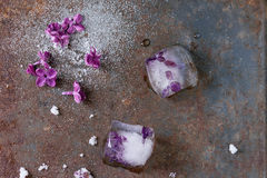 Ice cubes with lilac flowers. White sugar and sugared lilac flowers over old rusty iron background. Top view stock photo