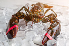 Ice cubes and raw lobster. Royalty Free Stock Image
