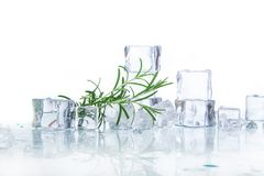 Ice cubes. With rosemary  on a white background Stock Photography