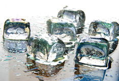 Free Ice Cubes Still Life Royalty Free Stock Images - 8234409