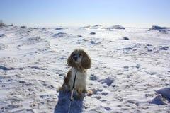 Ice Dog stock photo