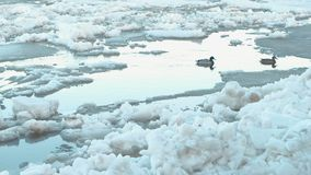 Ice drift on the river. Moving ice floes close up. Ducks on river. Ice drift on the river. Moving ice floes close up. Ducks on river stock footage
