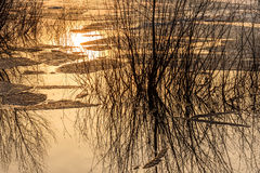 Ice drift water reflections lake. Abstract colorful spring background with ice floating on the water, willow branches and reflections in the lake against the royalty free stock photo