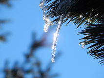 Ice drops at a sunny day Royalty Free Stock Photography