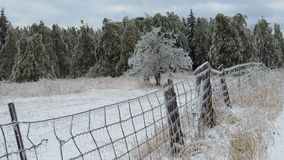 Ice on fence, trees and field after the storm Stock Photo