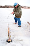 Ice Fisherman Pulling a Big Pike Stock Photo