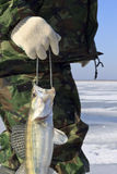 Ice Fishing. Winter fishing. Fishing for fish from the hole royalty free stock photography
