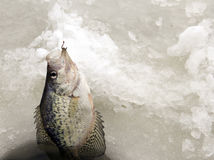 Ice Fishing for aa Crappie Royalty Free Stock Photo