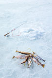 Ice fishing: fishing rod, hole and catch the fish on a rope Stock Images