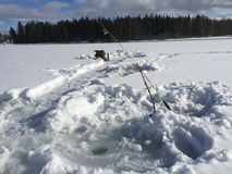 Ice fishing. In the north of Sweden royalty free stock photos