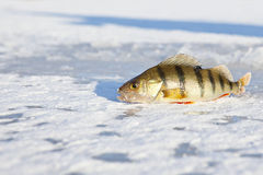 Ice-fishing Royalty Free Stock Photos