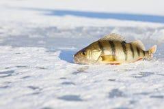 Ice-fishing Royalty Free Stock Photos