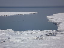 Ice floe 1. Ice along the north shore of Prince Edward Island at Cove Head Stock Photography