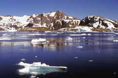 Ice floe in the artic sea