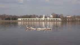 Ice floe with seagulls floats, April day. Spring in Veliky Novgorod, Russia stock footage
