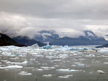 Ice floes from an artic glacier. Royalty Free Stock Image