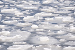 Ice floes Royalty Free Stock Image
