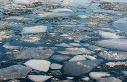 Ice floes Stock Image