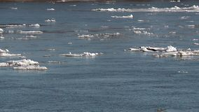 Ice floes float on the river in the spring during the ice drift. Floating ice floes on the river in the spring during the ice drift Sunny spring day congestion stock video
