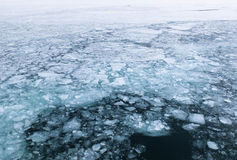 Ice floes floating on sea surface Royalty Free Stock Images