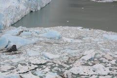 Ice floes of Perito Moreno glacier Stock Photography
